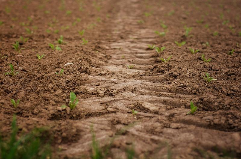 Совхоз «Севастопольский» рекультивирует замусоренные земли. По решению суда