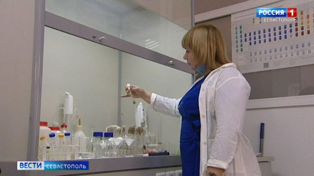 Ученые хотят очистить Черное море от нефти с помощью бактерий