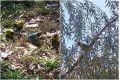 Главный парк Симферополя облюбовала стая попугаев-неразлучников