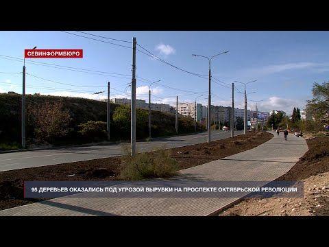 95 деревьев оказались под угрозой вырубки на проспекте Октябрьской Революции