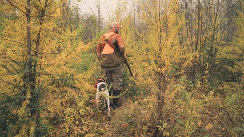 В России могут усложнить процедуру выдачи охотничьих билетов