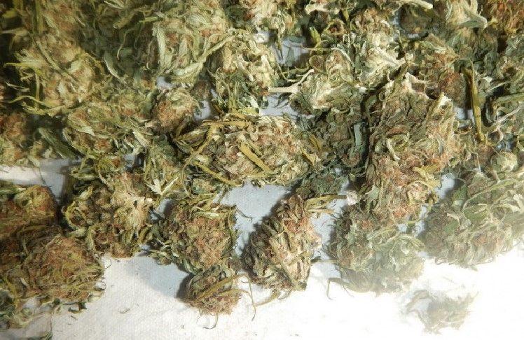 В Джанкойском районе Крыма нашли более двух килограммов марихуаны