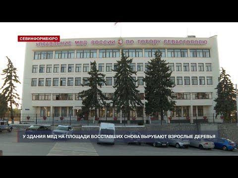 У здания севастопольского МВД снова вырубают взрослые деревья