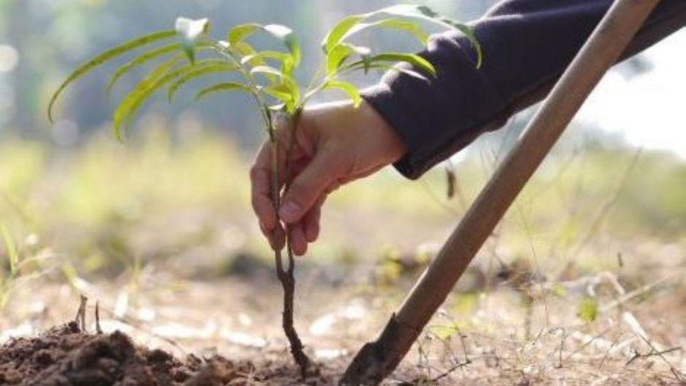 В Севастопольском районе в ноябре высадят сеянцы сосны, акации и вишни