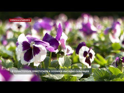 В Севастополе приступили к осенней высадке саженцев