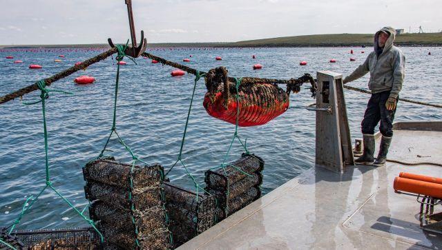 Что мешает развивать аквакультуру в Крыму – мнение эксперта