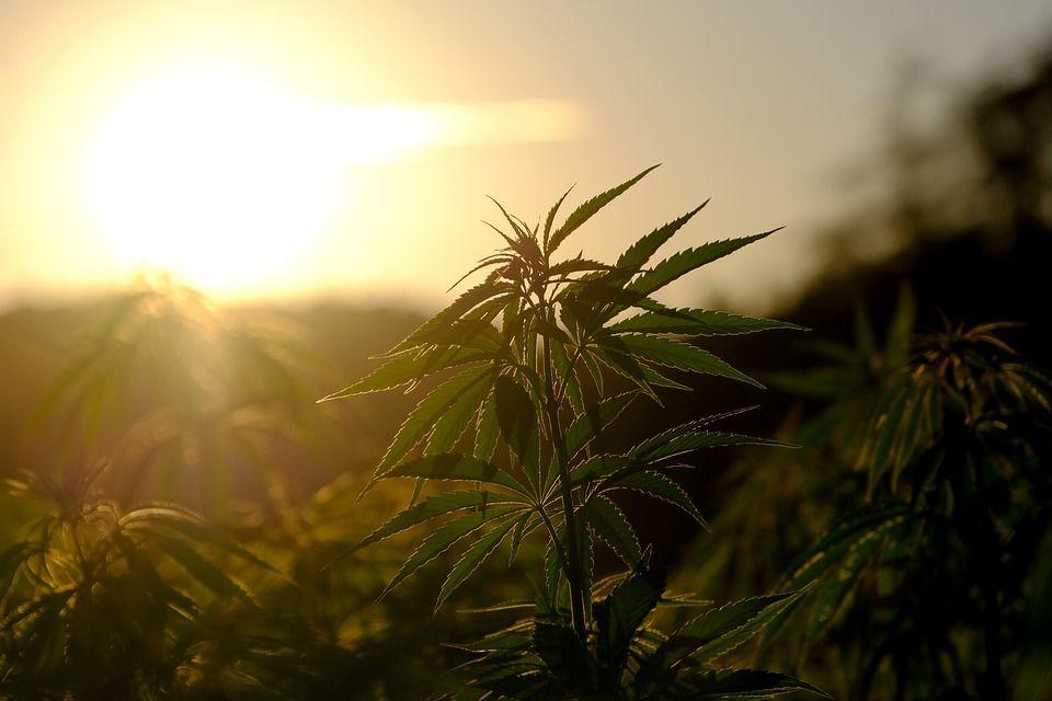 В Феодосии задержали мужчину за сбыт наркотиков