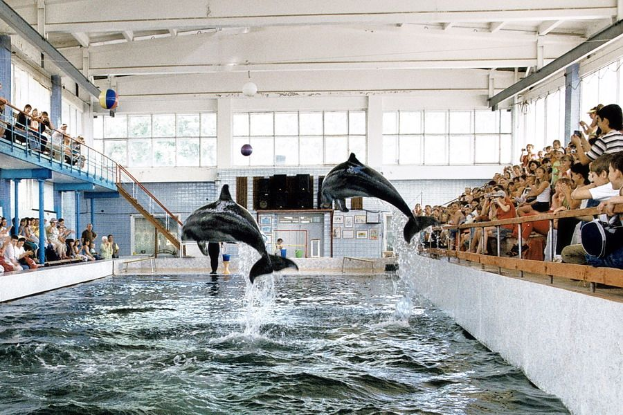 Карадагский дельфинарий закрывается из-за завершения сезонов выступлений