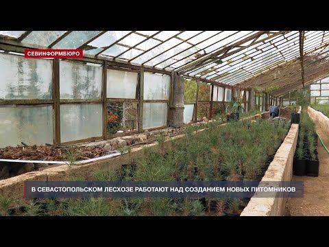 В Севастопольском Лесхозе думают о восстановлении заброшенных питомников