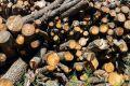 Вырубка леса под Феодосией может обернуться уголовным делом