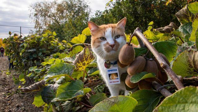 Крымская экзотика созрела: как кот Мостик киви собирал