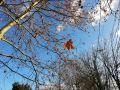 Погода в Крыму на 15 ноября: без существенных осадков и тепло до +13
