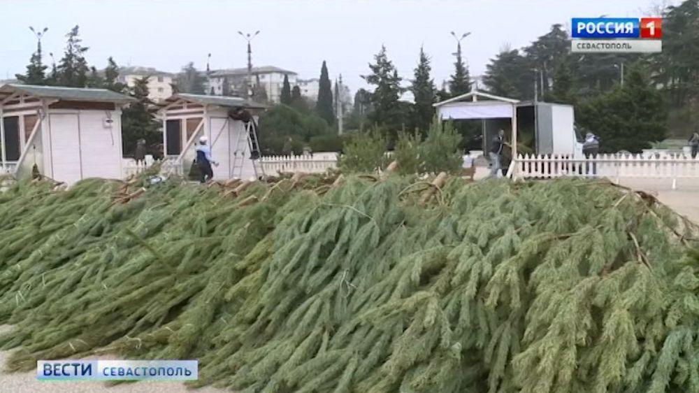 В Севастополе к Новому году откроют 42 ёлочных базара