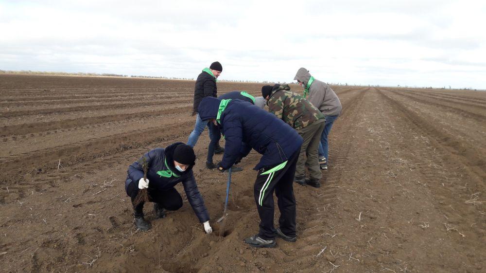 На территории Кировского района посадили 800 сеянцев Ясеня Ланцетного