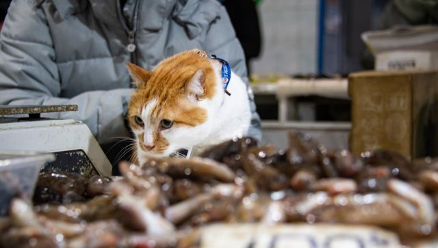 Что продают на самом рыбном рынке Крыма: инспекция кота Моста
