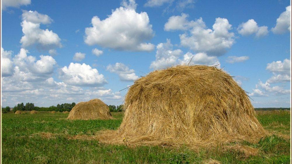 Минимущество Крыма предоставляет в аренду земельный участок для сенокошения