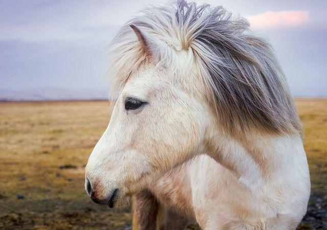 Белый пони потерялся в центре Керчи