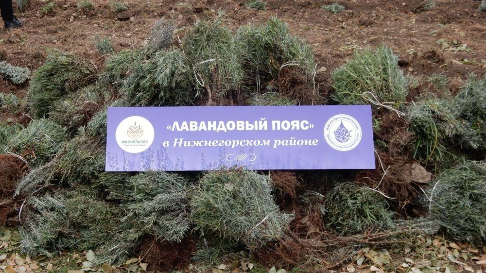 «Лавандовый пояс» украсит Нижнегорский район
