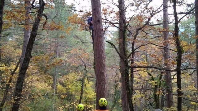 Спасатели сняли с дерева повисшего на кроне парапланериста