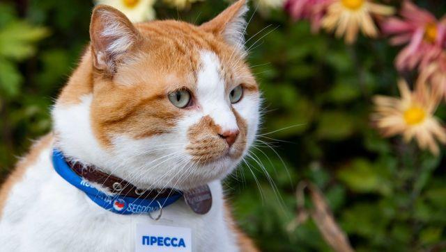 Крымский селекционер назвала новый сорт хризантем в честь Кота Мостика