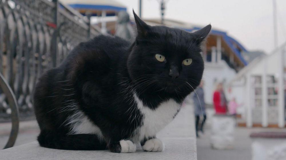 Уже во вторник в Крыму начнёт формироваться циклоническая депрессия