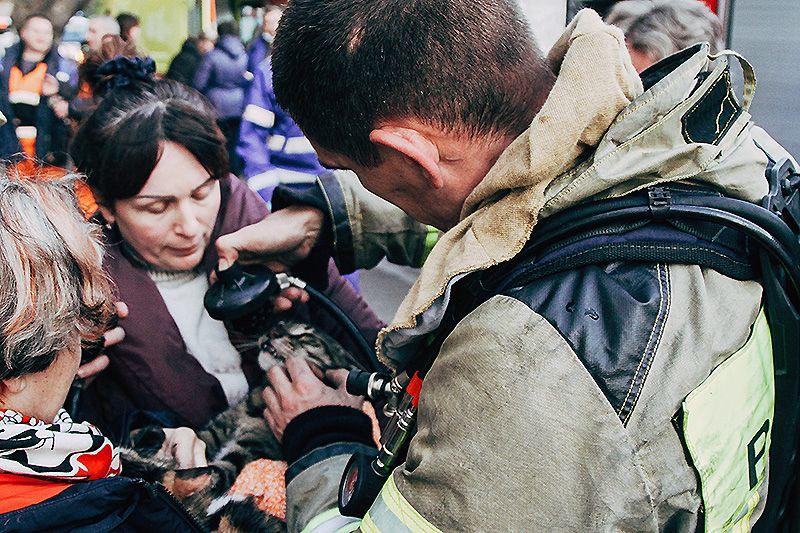 В День домашних животных севастопольские пожарные спасли трех котов и эвакуировали 12 человек