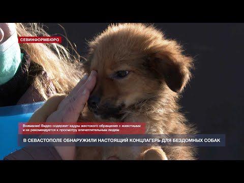 Живые скелеты и трупы щенков: в Севастополе проверили приют бездомных животных