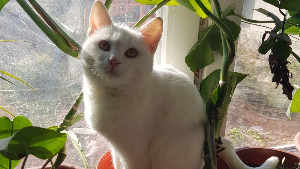 Специалистами управления ветеринарии г. Симферополь и Симферопольского района проведена проверка содержания домашних животных (кошки) на территории Симферопольского района