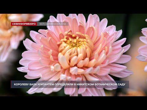 Королеву Бала хризантем определили в Никитском ботаническом саду