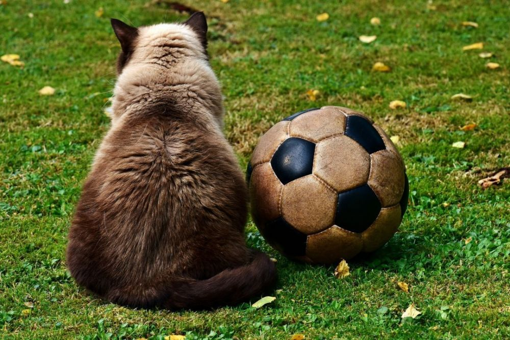 В Республике Крым следующий год объявили Годом футбола