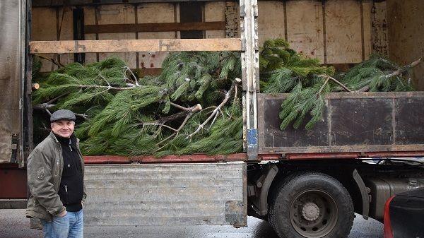 В образовательные учреждения района переданы 60 елок