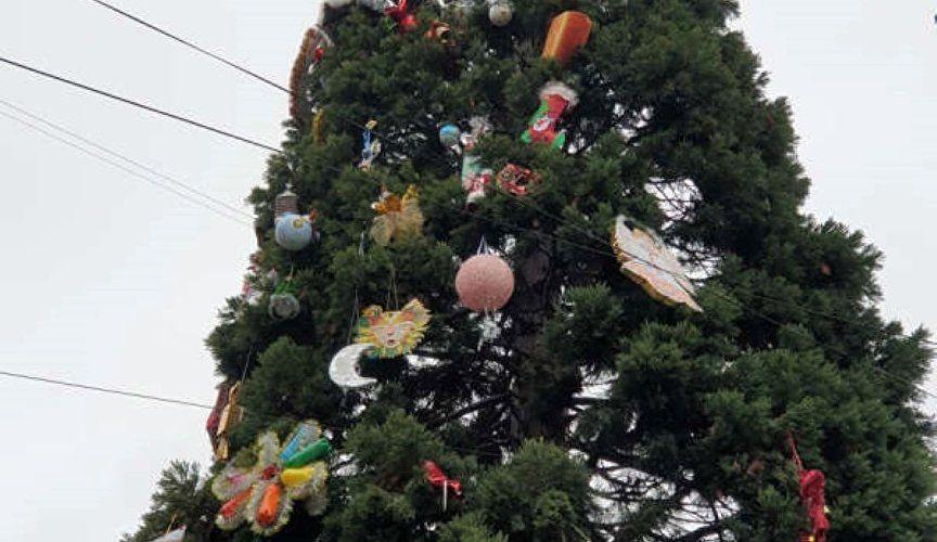 Самую экзотическую «ёлку» Крыма нарядили в Никитском ботсаду