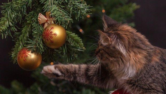 Как уберечь питомцев от опасностей новогодних праздников
