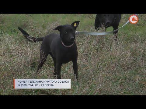История одной собаки из севастопольского приюта (СЮЖЕТ)