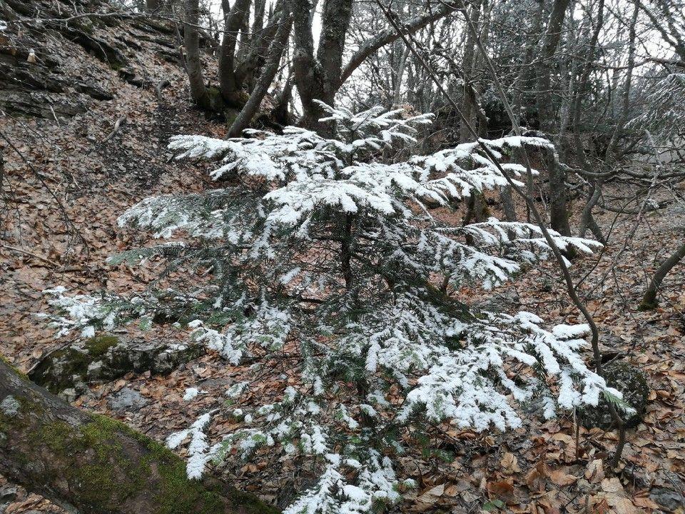 Погода в Крыму на 15 января: мокрый снег, гололедица и тепло до +5