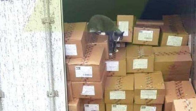 Кошка три недели плыла из Одессы в Израиль и ела одни конфеты
