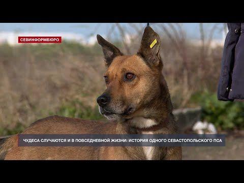 Долгожданная встреча: удивительная история севастопольского пса по кличке Дик