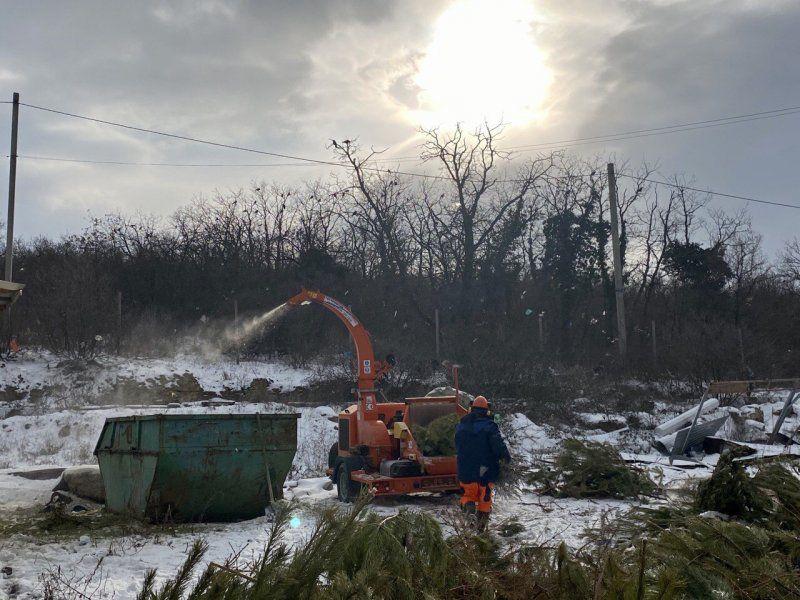 В Севастополе за два дня переработали 50 кубометров новогодних елок