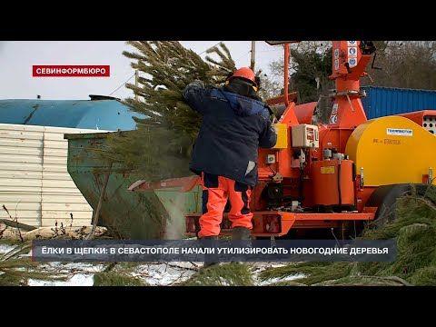 На севастопольском мусорном полигоне начали перерабатывать ёлки