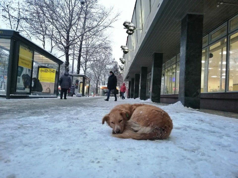 Погода в Крыму на 19 января: снег и мороз до -7°