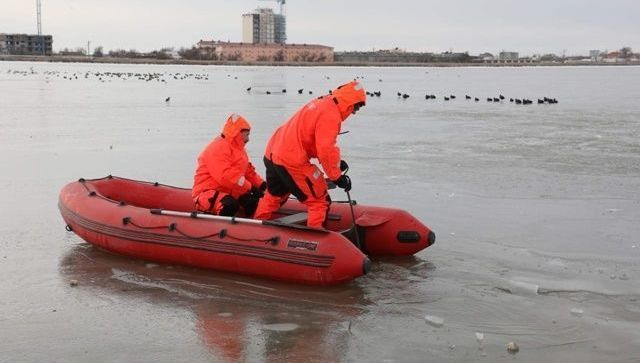 На Сакских озерах спасли вмерзших в лед лебедей - фото, видео