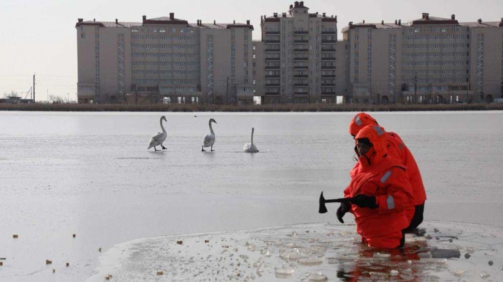 На озере Сасык-Сиваш лебеди попали в ледяной плен