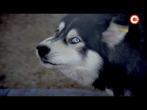 С собаками из севастопольского приюта работают кинологи (СЮЖЕТ)