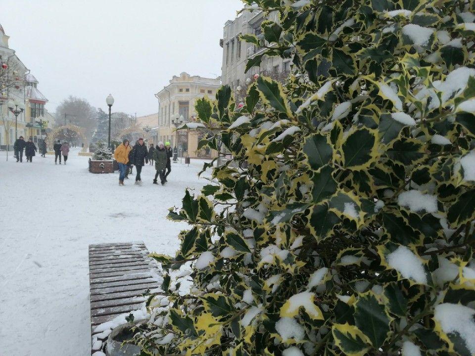 Погода в Крыму на 21 января: южный ветер и тепло до +9°