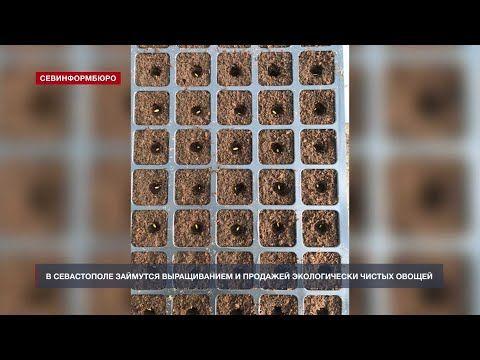 В Севастополе займутся выращиванием экологически чистых овощей