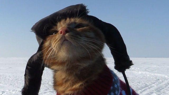 Симба в ушанке: кот-рыболов из Владивостока покоряет соцсети - видео