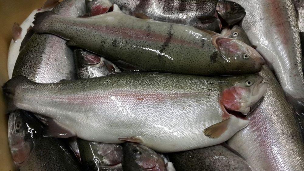 ООО «Рыбный рай» – настоящий рыбный рай