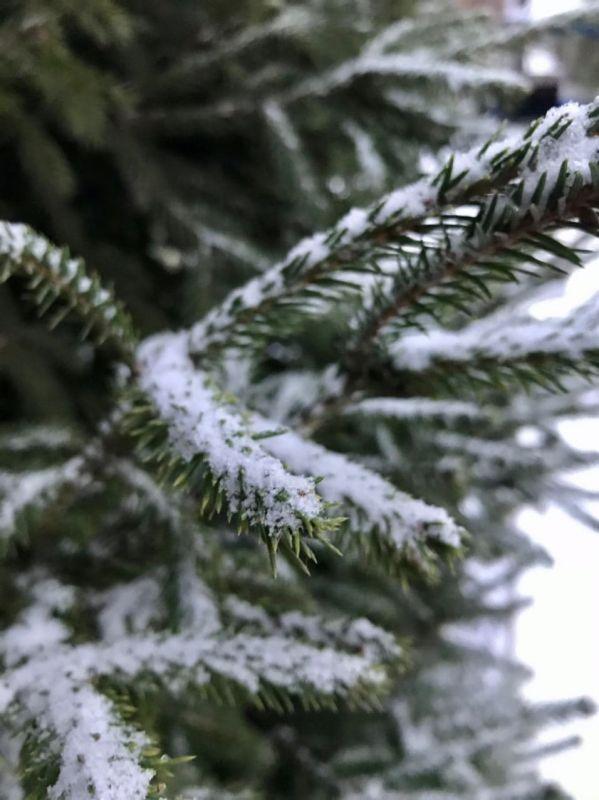 В Крыму снова выпадет снег