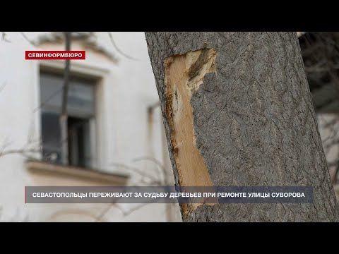 Севастопольцы переживают за судьбу деревьев при ремонте улицы Суворова