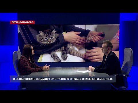 В Севастополе реализуют проект «911 – служба спасения животных»